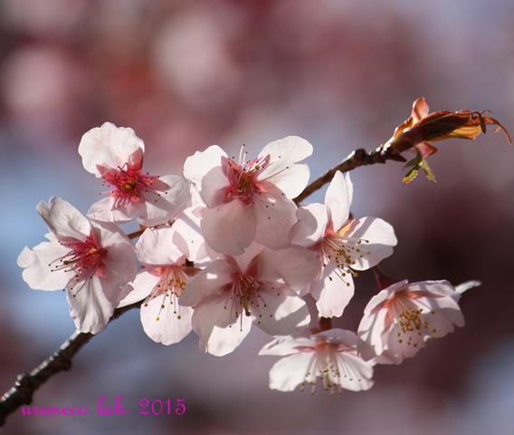 2月13日春の予感3