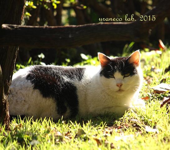 2月6日白黒猫2
