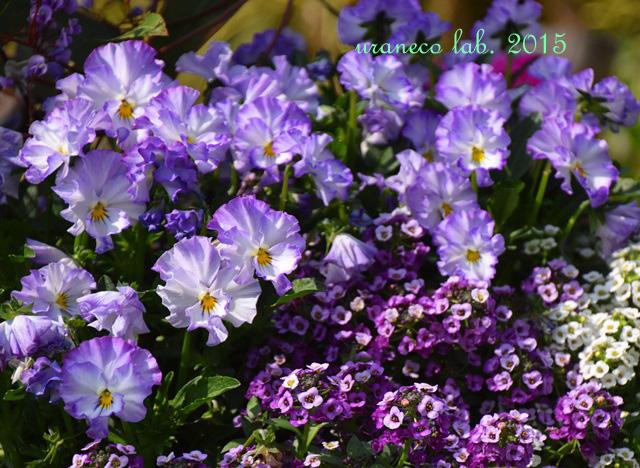3月27日紫いろの時