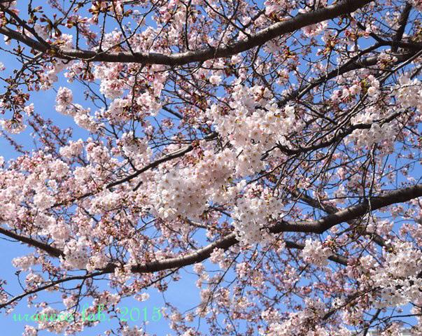 4月1日sakura sky