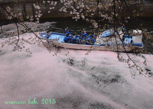 4月6日ピンク色の川9