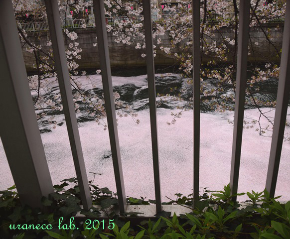 4月6日ピンク色の川6