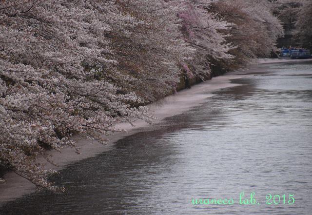 4月6日ピンク色の川2