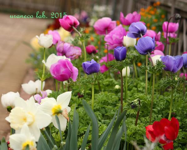 4月7日春の庭