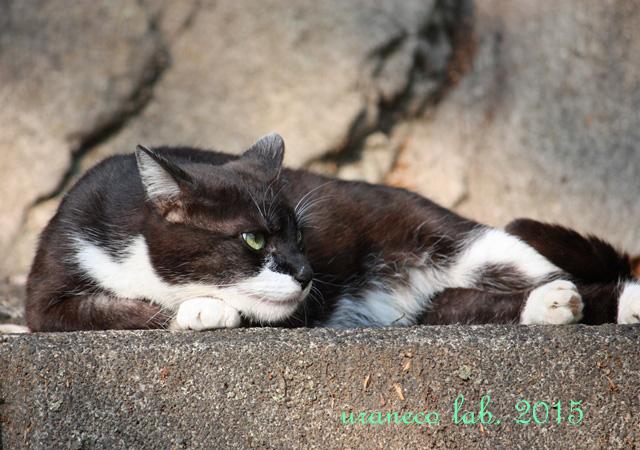 4月24日白黒猫3