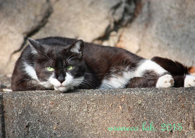 4月24日白黒猫2