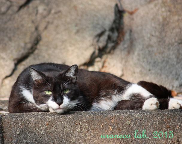 4月24日白黒猫
