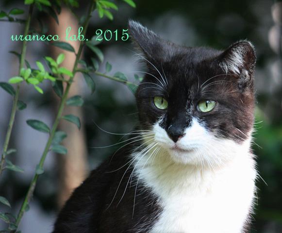 4月24日白黒猫5
