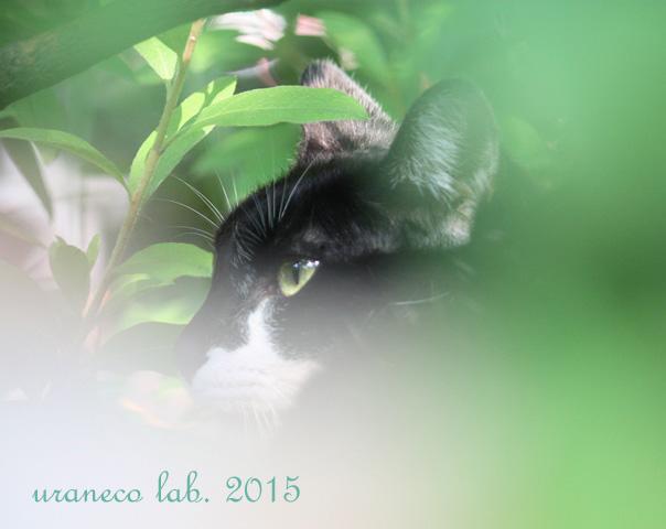 4月24日白黒猫6