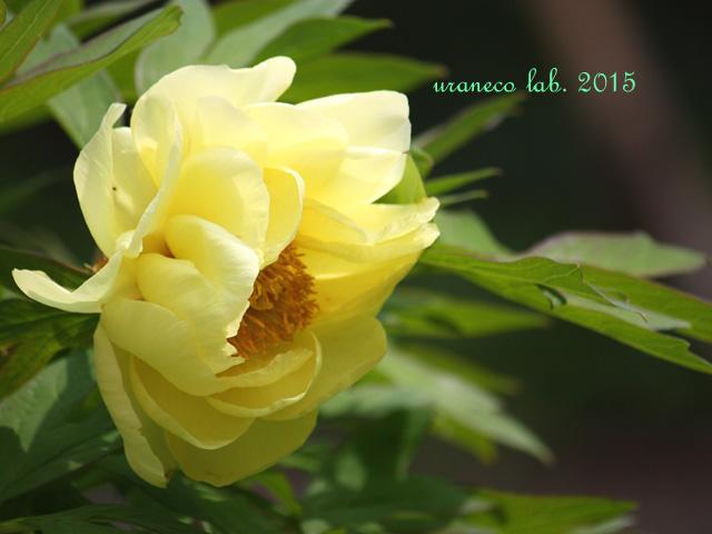 4月23日牡丹7