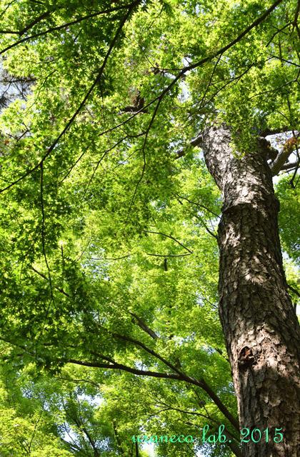 5月7日巨木