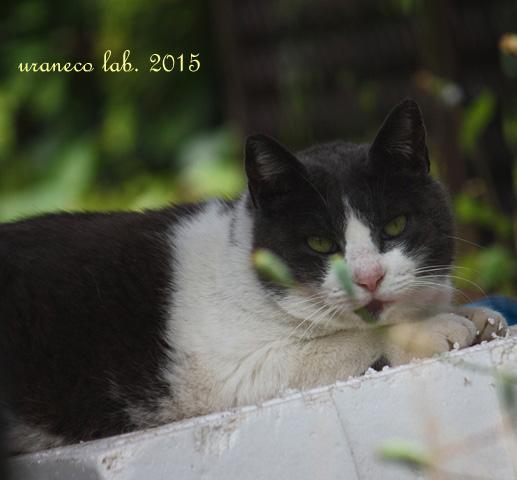5月14日白黒猫5