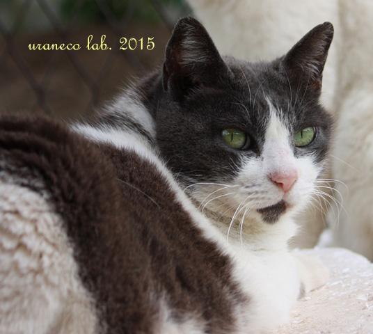 5月14日白黒猫4