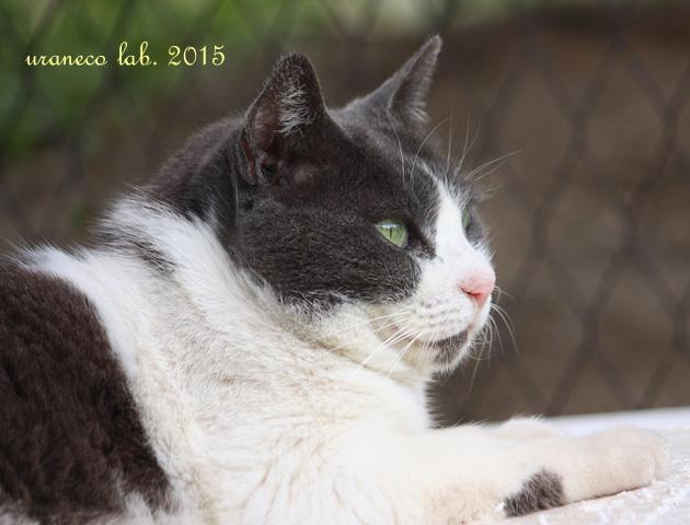 5月14日白黒猫