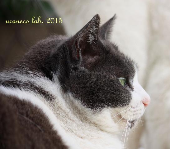 5月14日白黒猫2