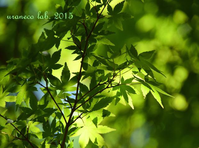 5月15日新緑3