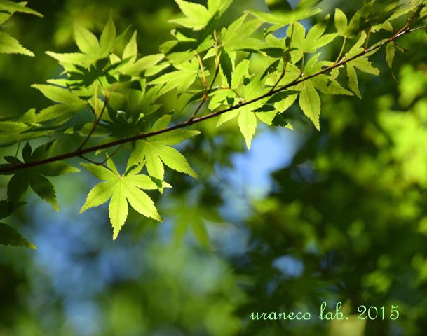 5月15日新緑2