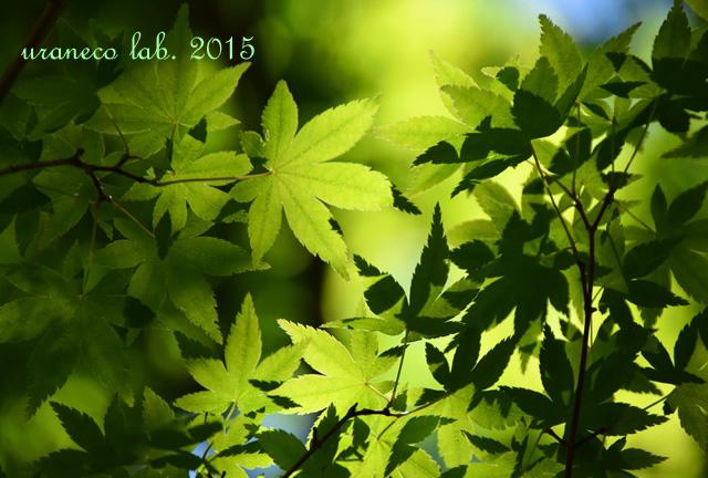 5月15日新緑