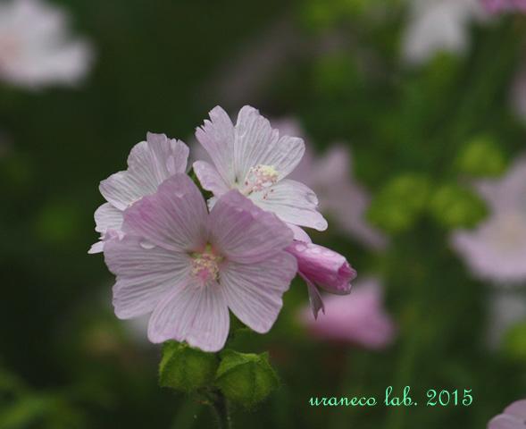 6月9日ピンク