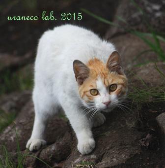 3月26日白茶もふ子猫3