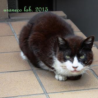 5月23日青山の猫白黒ブチ2