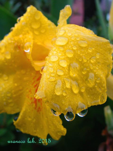 6月23日雨の日8
