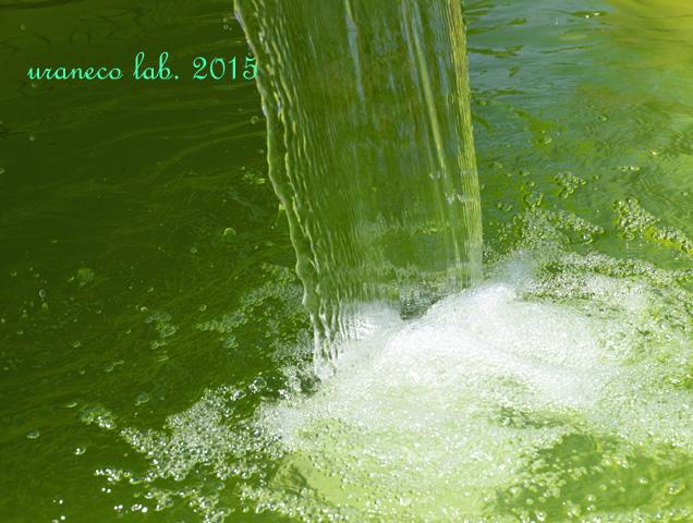 6月24日水の戯れ3