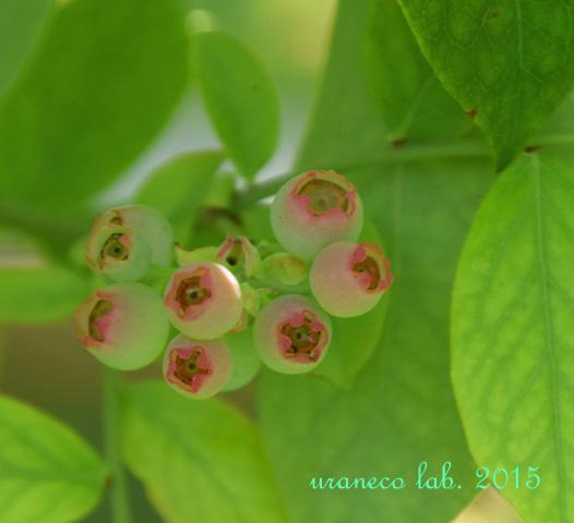 6月29日果樹園3