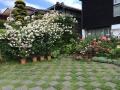 SPAZIOの庭2015・6月