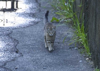 150528_cat_03w.jpg