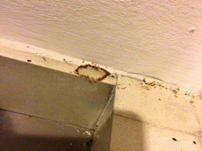 ants_008.jpg