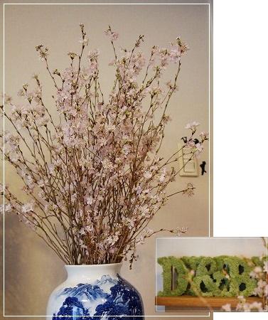 DIO家で桜祭り~!