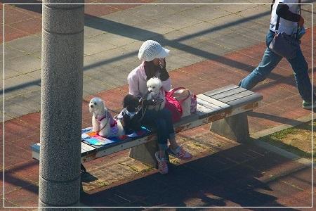 飼い主の行った方を見つめる3姉妹(^_^)v