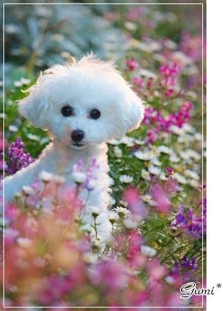 お庭の花で~@ぐみ