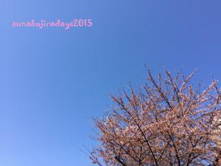 20150423_sakura.jpg