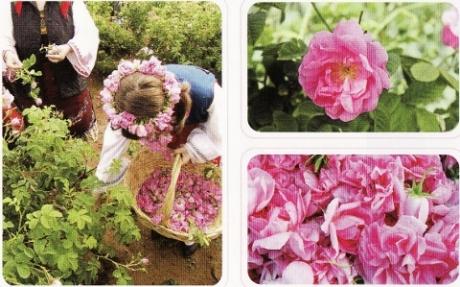 ニンニク料理の臭い、汗のニオイもふんわり優しいバラの香りに!飲むフレグランスサプリ【クリスタル・ローズ】