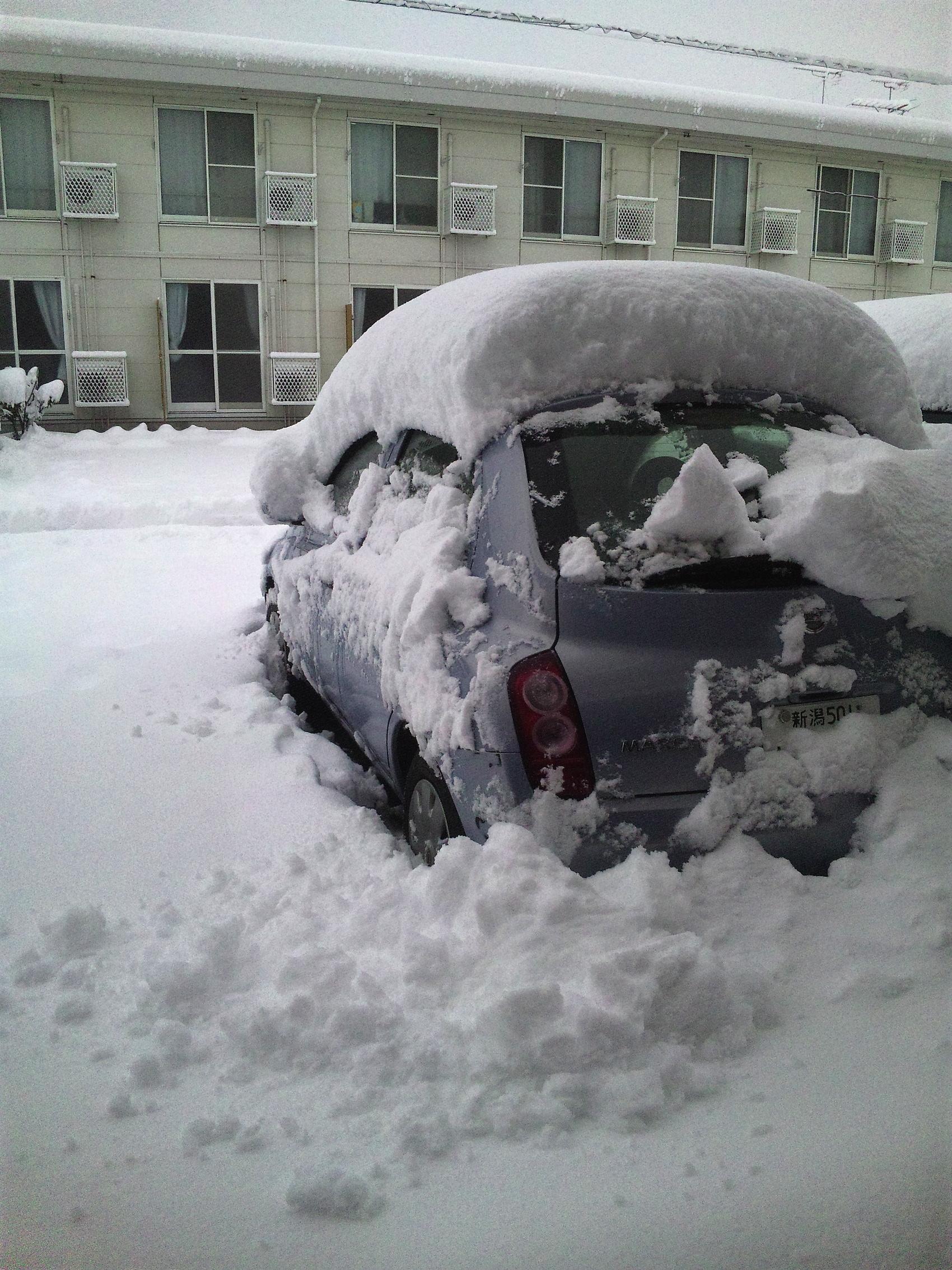 初雪、そして積もりました