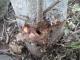 ヤマボウシの根元の虫が空けた穴