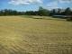 刈り取られた麦畑