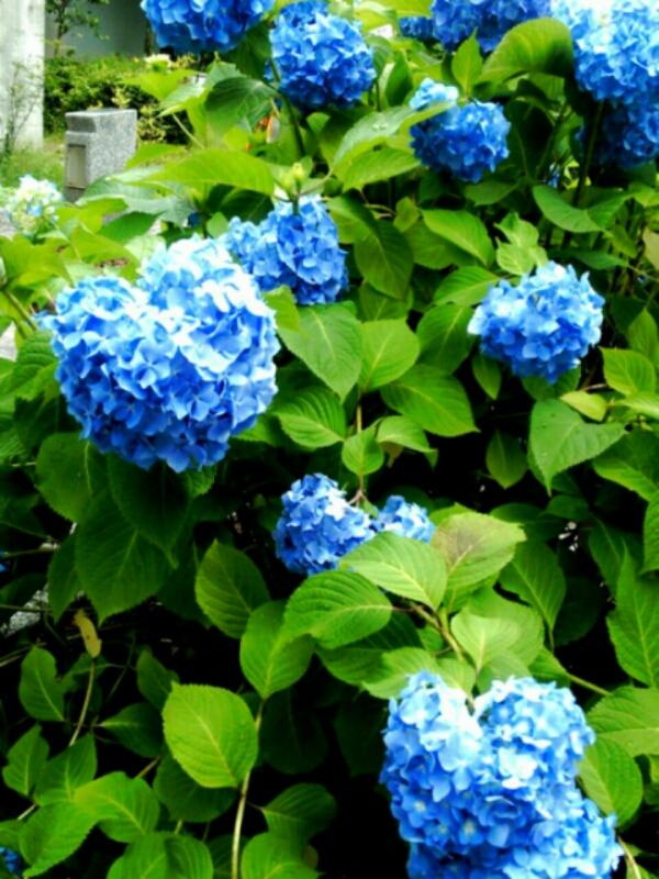 fc2_2015-06-20_12-26-02-096.jpg