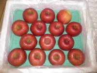 真っ赤な青森リンゴ150202
