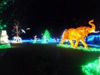 光の動物園150210