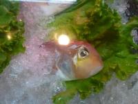 お魚150512