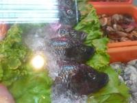 お魚さんとかカキとか貝とか150512