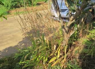 クフェア12月菜園