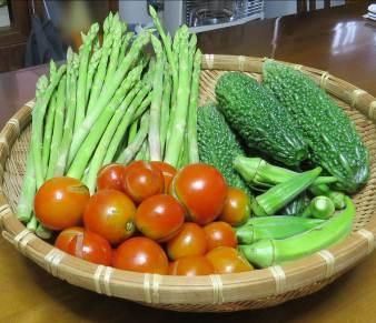アスパラガス、トマト、ニガウリ収穫