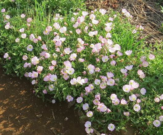 菜園の花1
