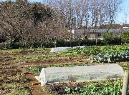 冬の菜園1月