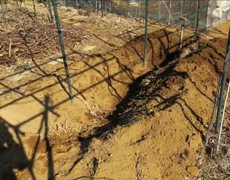 ヤマイモ掘った後の穴
