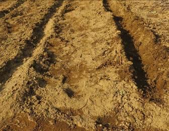 油粕肥料を入れた溝